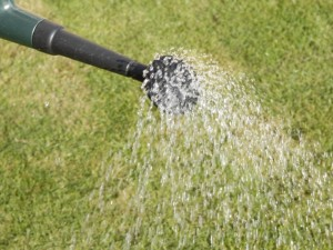 liquid feed on lawn
