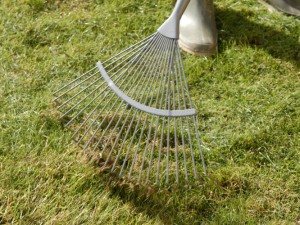 raking or scarifying the lawn