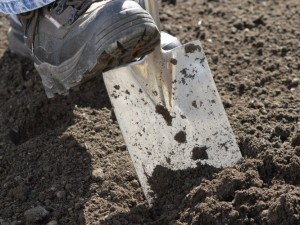 Removing grass with spade