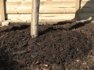 Using mulch to conserve moisture
