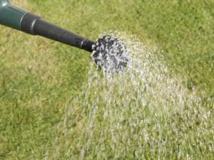 liquid feed on lawn