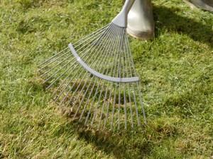 raking or scarifying the lawn