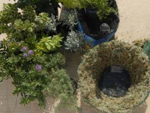 Using black plastic disc to reduce water loss in hanging basket