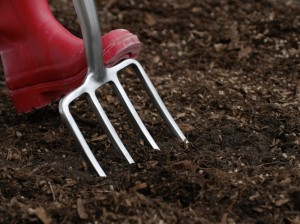 Preparing soil for growing peas
