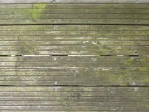 Decking with algae